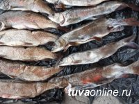 В Туве поймали браконьера с 21 хвостами ленка