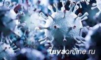 В Туве на 18 августа COVID-19 заболели 29 человек