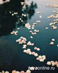 3 сентября в Туве в Енисей отпустят сотни белых живых цветов