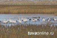 В Туве ведут профилактику птичьей чумы среди местных охотников