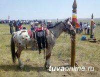 В Туве, где растет поголовье лошадей, намерены возродить исчезающую тувинскую породу