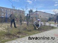 КЫЗЫЛ. Ко Дню рождения города горожане посадят 1000 деревьев