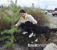 В Туве ко Дню города Кызыла автоинспекторы вместе с четвероногим коллегой посадили деревья