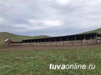В Туве завершают строительство первых площадок для откорма овец