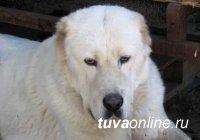 Кызылчанина, укравшего, чтобы сварить на обед собаку, суд приговорил к обязательным работам