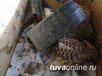 В Туве инспекторами ДПС выявлены факты незаконной охоты и рыболовства