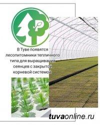В Туве появятся лесопитомники тепличного типа для выращивания сеянцев с закрытой корневой системой