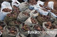 В Туве планируют заняться сбором и переработкой дикоросов в промышленных масштабах