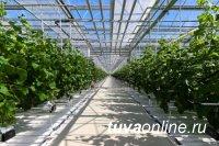 В Туве планируют обеспечивать жителей местными овощами круглый год