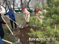 В Туве на Международную акцию «Сад Памяти» в 2021 году на 30 га лесного фонда высадят 90 тысяч деревьев