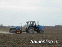 В ходе начавшейся посевной в Туве засеяно зерновыми 1200 га (8% от плана)