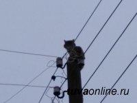 Тувинские энергетики спасли кошку, просидевшую на опоре ЛЭП четверо суток