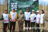 """В Туве в рамках акции """"Сады памяти"""" посажены 90 тысяч кедров"""