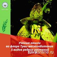 В Туве зарегистрированы 5 редких видов растений