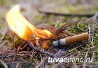 Житель Дзун-Хемчикского района Тувы непотушенной сигаретой нанес лесу ущерб почти на 1 млн. рублей