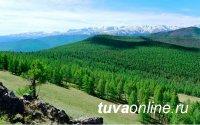 Земельный фонд Тувы составляет 16,8 млн. га, 64% из них - земли лесного фонда