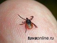 За неделю в больницы Тувы обратились 73 человека в связи с укусом клещей