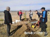 К 100-летию Тувинской Народной Республики посажено 16 913 саженцев