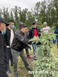 Врио главы Тувы с активистами молодежных движений высадил голубые ели