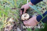 """В Туве на станции """"Тайга"""" продолжаются поиски трех грибников"""