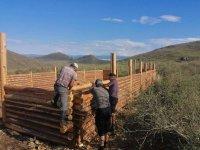 В Туве благодаря губернаторскому проекту семья Кима Хертека получила 200 овец