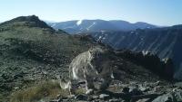 Старейший снежный барс Хоргай вернулся из Монголии в Туву