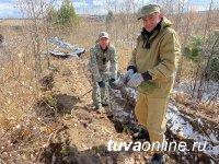В Туве впервые провели компенсационное лесовосстановление - на 31 га посажены 124000 сосны
