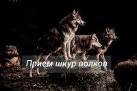 В Туве принимают шкуры волка за 7 тысяч рублей