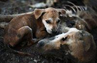 Мэрия Кызыла принимает от НКО заявки на конкурс грантов по созданию приюта для бродячих животных
