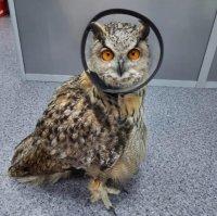 В ветеринарной клинике Кызыла прооперировали дикую сову